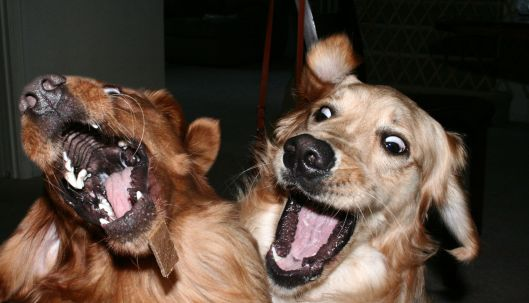 Look at this awesome photo of dogs being awesome.